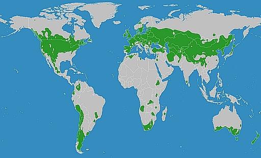 Världskarta som visar områden med tempererat klimat.