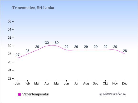 Vattentemperatur i  Trincomalee. Badvattentemperatur.