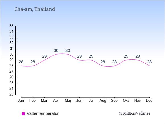 Vattentemperatur i  Cha-am. Badvattentemperatur.
